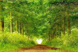 road 1240030_436329526475908_808982638_n